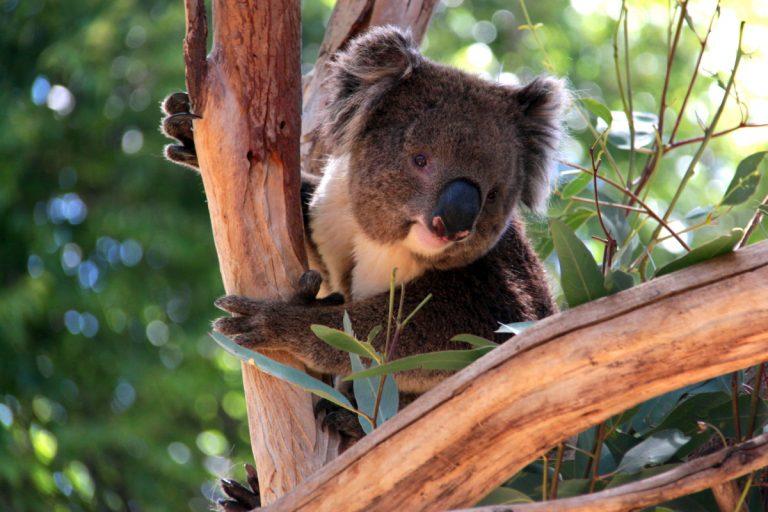 Adelaide's friendly locals